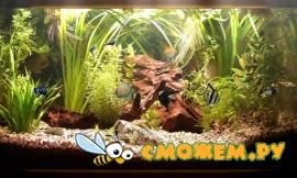 Dream Aquarium Screensaver 1.24 + 21 ��������