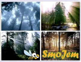 Forests Wallpaper