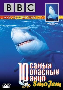 BBC: 10 ����� ������� ���� / Ten Deadliest Sharks